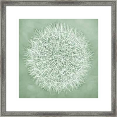 Dandelion Macro Abstract Soft Green Framed Print by Jennie Marie Schell