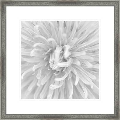 Dandelion Macro  Framed Print by Tommytechno Sweden