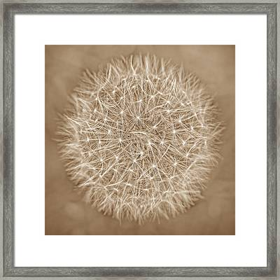 Dandelion Marco Abstract Brown Framed Print