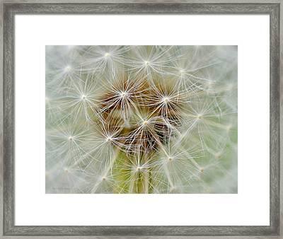 Dandelion Matrix Framed Print