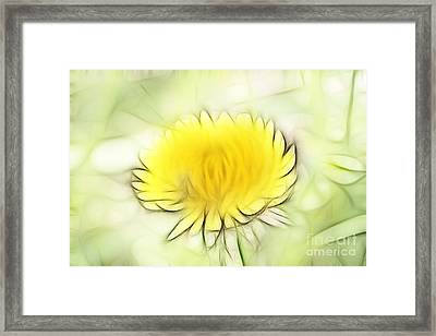 Dandelion Framed Print by Michal Boubin