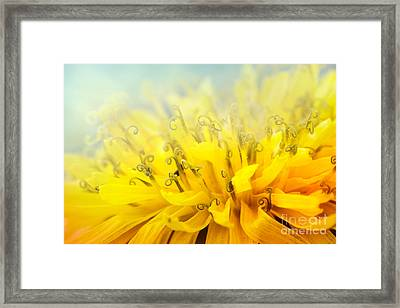 Dandelion  Framed Print by Mythja  Photography