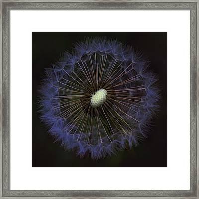 Dandelion Nebula Framed Print by Kathy Clark