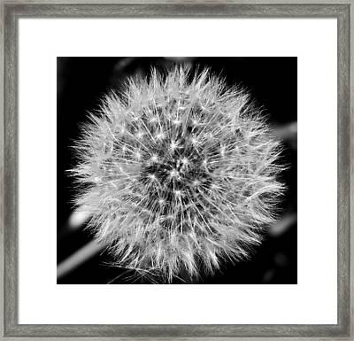 Dandelion Nebula Framed Print by Thomas Samida
