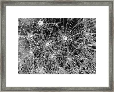 Dandelion Framed Print by Nicholas Burningham