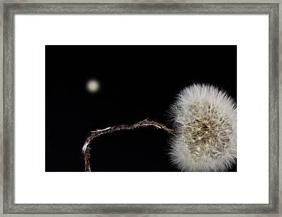 Dandelion Parachute Ball Framed Print by Bob Orsillo