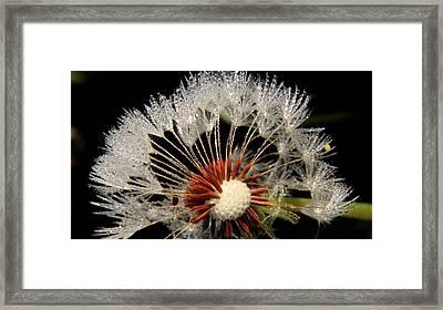 Dandelion Framed Print by Paul Adcock