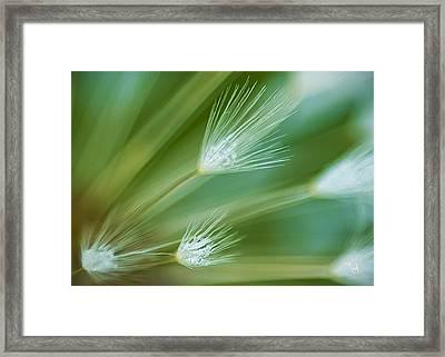 Dandelion Plume Framed Print