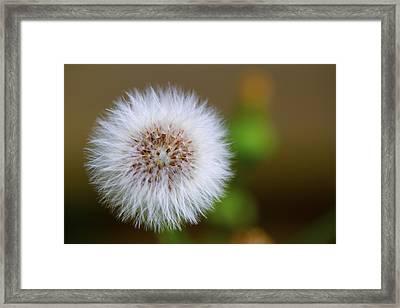 Dandelion Powder Puff Parachute Ball Framed Print