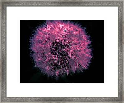Dandelion Red Framed Print by Sherman Perry