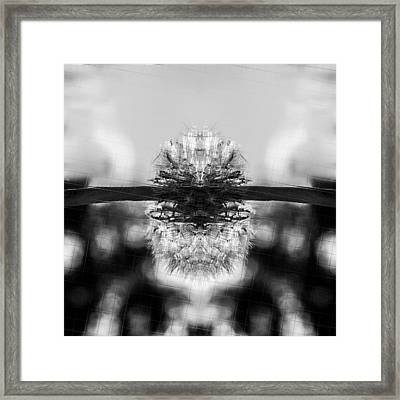 Dandelion Reflection Framed Print by Tommytechno Sweden