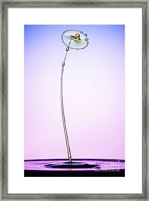 Dandelion Framed Print by Richard Mason