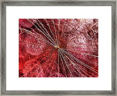 Dandelion Seed Abstract Framed Print