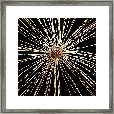 Dandelion Seed And Pappus Framed Print by Natural History Museum, London