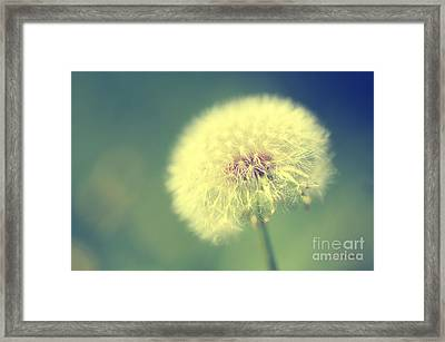 Framed Print featuring the photograph Dandelion Seed Head by Karen Slagle