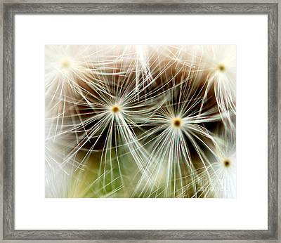Dandelion Seed Macro Framed Print by Christy Phillips