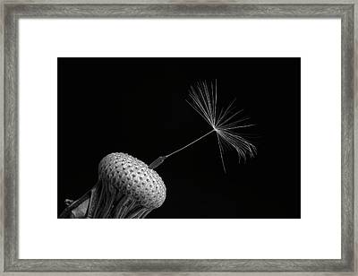 Dandelion Seed  Waterloo, Quebec, Canada Framed Print by David Chapman