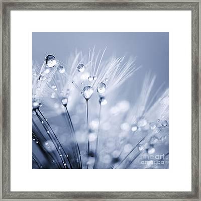 Dandelion Seed With Water Droplets In Blue Framed Print by Natalie Kinnear