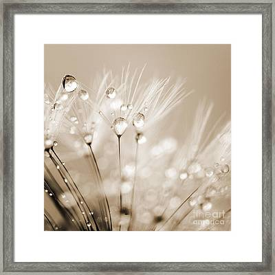 Dandelion Seed With Water Droplets In Sepia Framed Print by Natalie Kinnear
