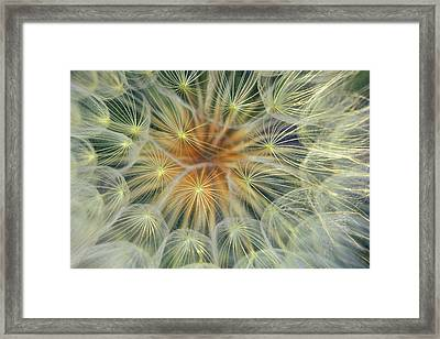 Dandelion Seedhead Close-up Framed Print by Jaynes Gallery