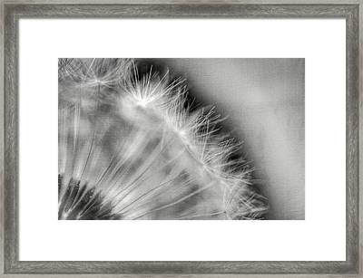 Dandelion Seeds - Black And White Framed Print