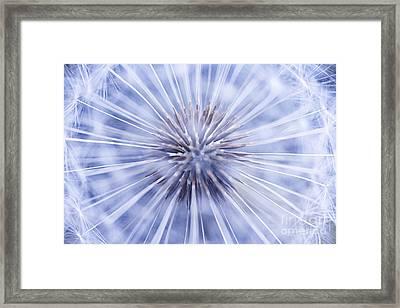 Dandelion Seeds Framed Print by Elena Elisseeva