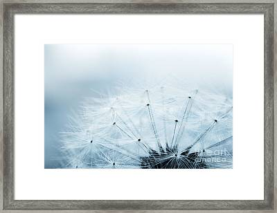 Dandelion Seeds Framed Print by Mythja  Photography