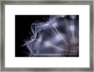 Dandelion Seeds With Water Drop Framed Print