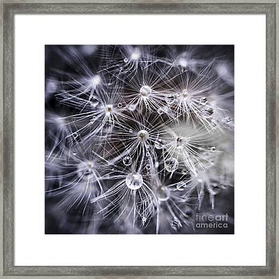 Dandelion Seeds With Water Drops Framed Print