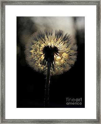 Dandelion Sunrise - 1 Framed Print by Kenny Glotfelty
