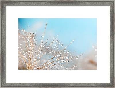 Dandelion Framed Print by Svetoslav Radkov