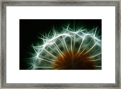 Dandelion Framed Print by ISAW Gallery