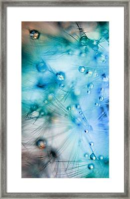 Winter - Dandelion With Water Droplets Abstract Framed Print