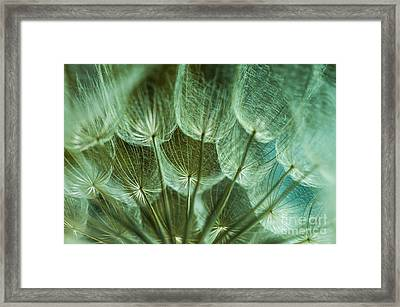 Dandelions 06 Framed Print by Iris Greenwell