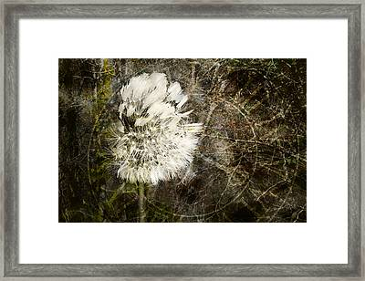 Dandelions Don't Care About The Time Framed Print