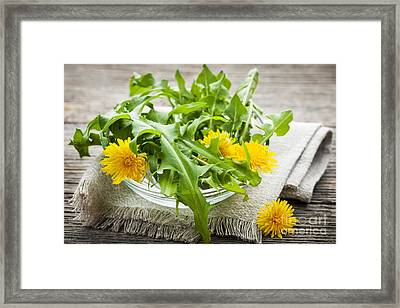 Dandelions Greens And Flowers Framed Print by Elena Elisseeva