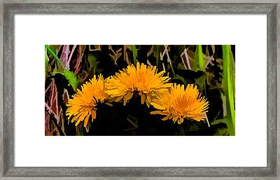 Dandelions In Group Si By Leif Sohlman Framed Print