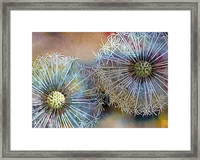 Dandelions Framed Print by John Christopher Bradley