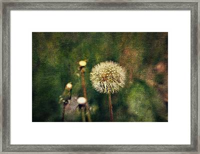 Dandelions Framed Print by Maria Angelica Maira