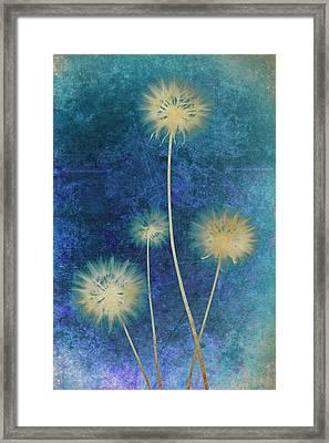 Dandelions Framed Print by Nicole Neuefeind