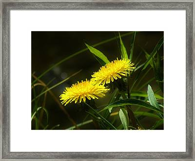 Framed Print featuring the photograph Dandelions by Sherman Perry