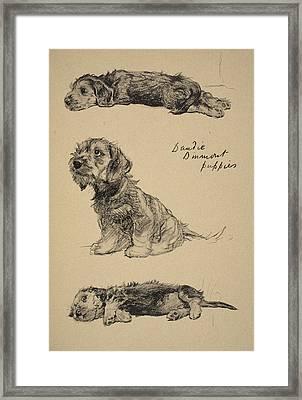 Dandie Dinmont Puppies, 1930 Framed Print by Cecil Charles Windsor Aldin