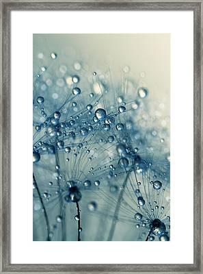 Framed Print featuring the photograph Dandy Blue Shower by Sharon Johnstone