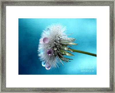 Dandy Candy Framed Print