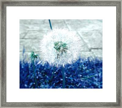 Framed Print featuring the photograph Dande Clock Blue by Laurie Tsemak