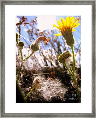 Framed Print featuring the photograph Dandy Day by Kathy Bassett