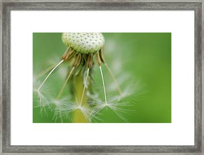 Dandy Hold-overs Framed Print by Arthur Fix