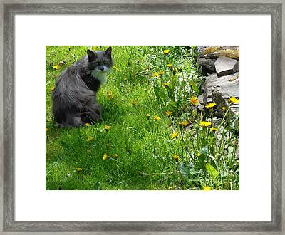 Framed Print featuring the photograph Dandy Lion Cat by Christina Verdgeline