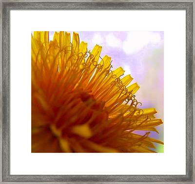 Dandy Lion Framed Print