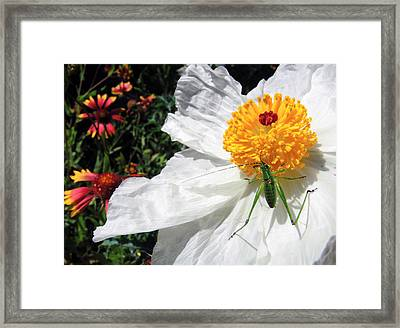 Dandy Framed Print by Skip Hunt